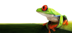 frog6